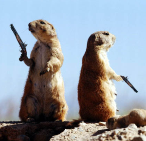 Dueling Rodents